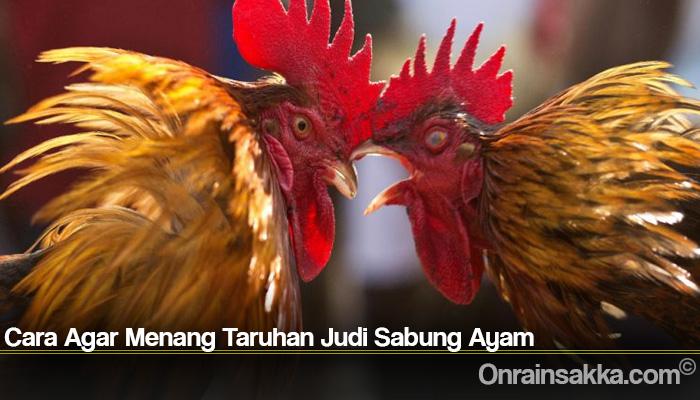 Cara Agar Menang Taruhan Judi Sabung Ayam