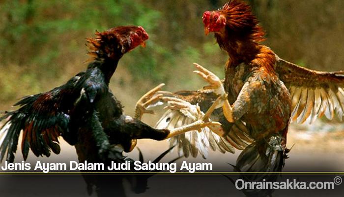 Jenis Ayam Dalam Judi Sabung Ayam